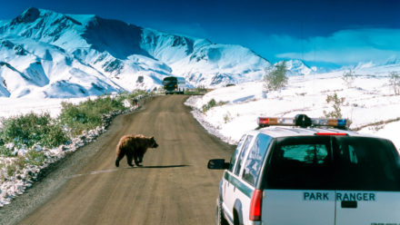 Aljaška – Serengeti severu